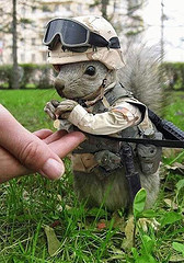 general-squirrel.jpg