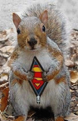super-squirrel.jpg